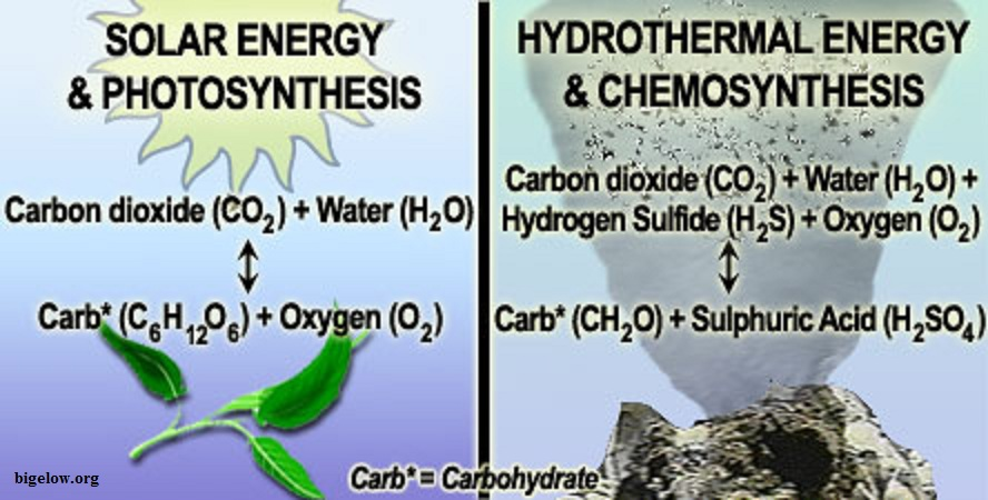 chemosynthesis for kids Chemosynthesis is making food energy from chemicals in the ocean this process mainly relates to the microbes surrounding deep sea vents first, vents disperse hydrothermal fl uids containing hydrogen sulfide into the deep ocean water.